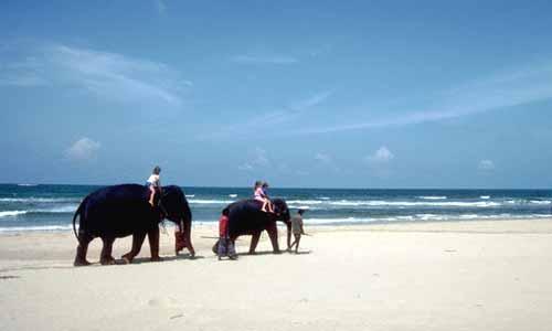 Elephant Safari at Bentota Beach